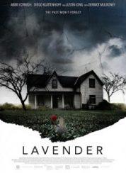 Lavanta Lavender